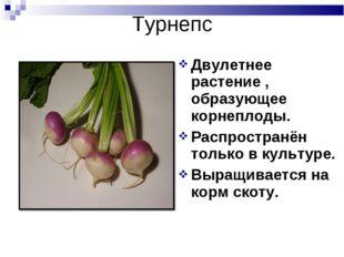Турнепс Двулетнее растение , образующее корнеплоды. Распространён только в ку