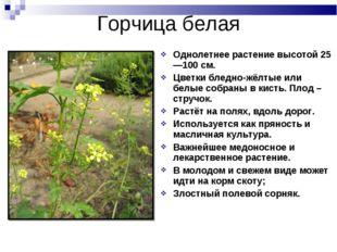 Однолетнее растение высотой 25—100см. Цветки бледно-жёлтые или белые собраны