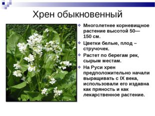 Многолетнее корневищное растение высотой 50—150см. Цветки белые, плод – стру