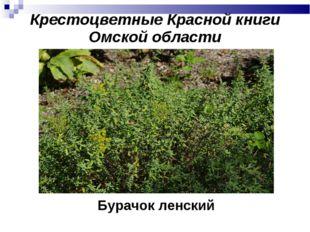 Бурачок ленский Крестоцветные Красной книги Омской области