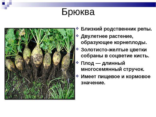 Брюква Близкий родственник репы. Двулетнее растение, образующее корнеплоды. З...