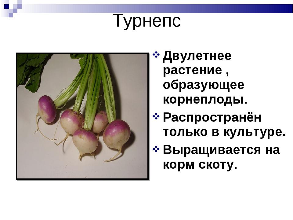 Турнепс Двулетнее растение , образующее корнеплоды. Распространён только в ку...