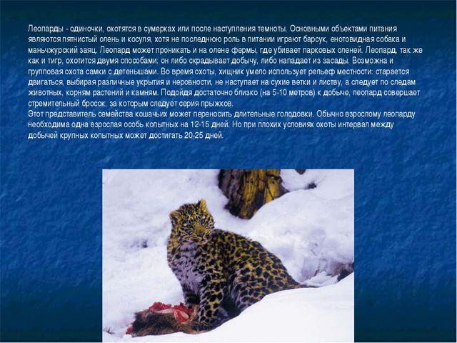 Леопарды - одиночки, охотятся в сумерках или после наступления темноты. Основ...