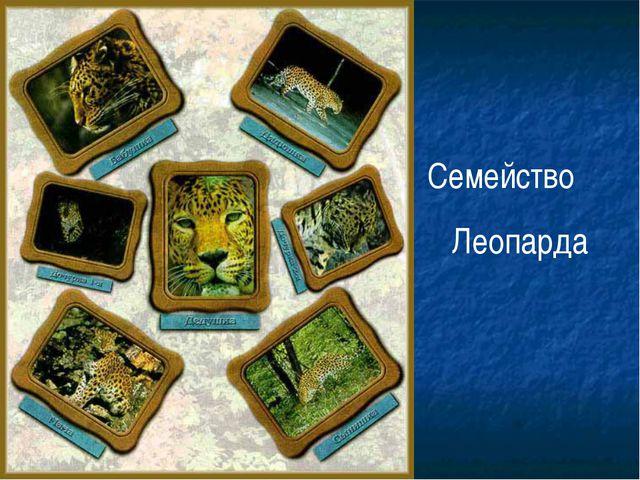 Семейство Леопарда