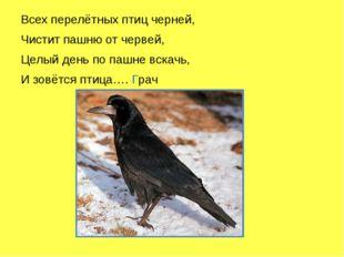 Всех перелётных птиц черней, Чистит пашню от червей, Целый день по пашне вск
