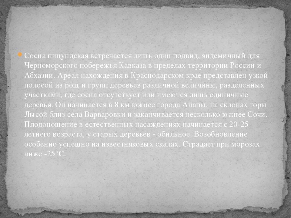 Сосна пицундская встречается лишь один подвид, эндемичный для Черноморского п...
