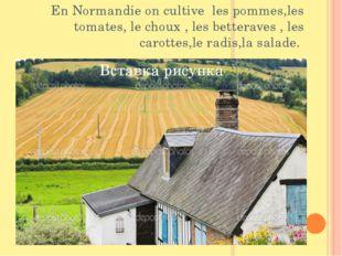 En Normandie on cultive les pommes,les tomates, le choux , les betteraves , l