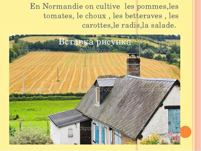 En Normandie on cultive les pommes,les tomates, le choux , les betteraves , l...