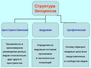 Основные свойства экосистемы: 1. Круговорот веществ и энергии. 2. Устойчивост