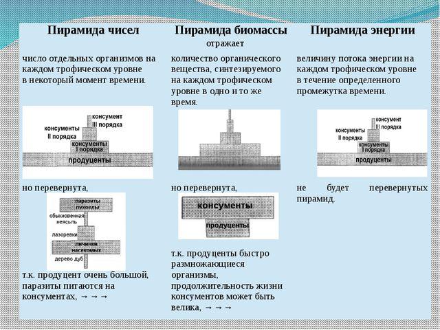 Пирамида чисел Пирамида биомассы Пирамида энергии отражает число отдельных ор...