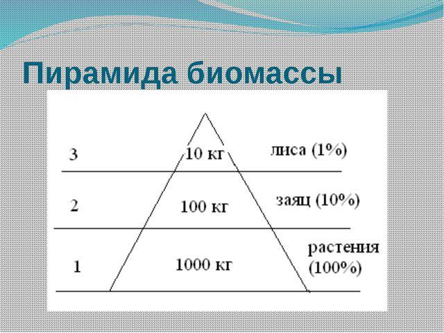 Пирамида биомассы