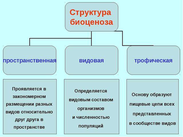 Основные свойства экосистемы: 1. Круговорот веществ и энергии. 2. Устойчивост...