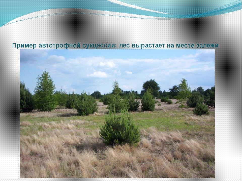 Пример автотрофной сукцессии: лес вырастает на месте залежи