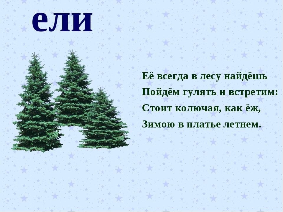 ели Её всегда в лесу найдёшь Пойдём гулять и встретим: Стоит колючая, как ёж,...