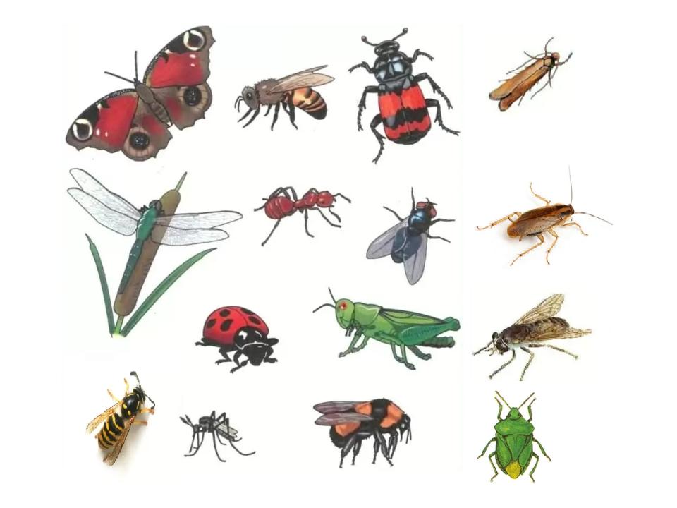 забрасывали все о насекомых с картинками шатунах