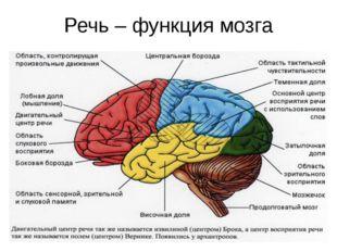 Речь – функция мозга