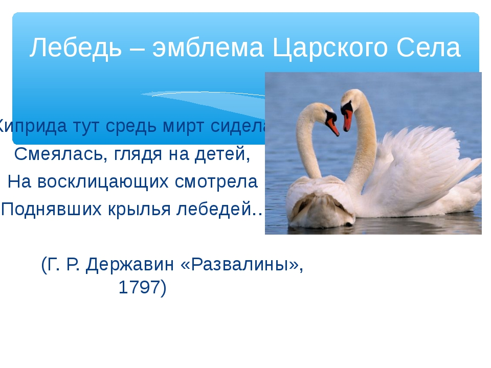 Лебедь – эмблема Царского Села Киприда тут средь мирт сидела, Смеялась, глядя...