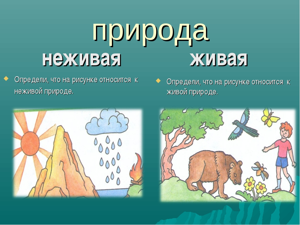 природа неживая живая Определи, что на рисунке относится к неживой природе. О...