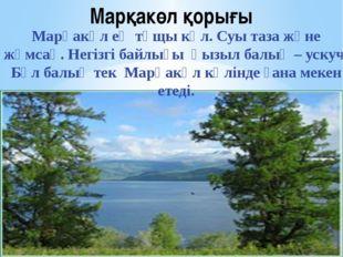 Марқакөл қорығы Марқакөл ең тұщы көл. Суы таза және жұмсақ. Негізгі байлығы қ