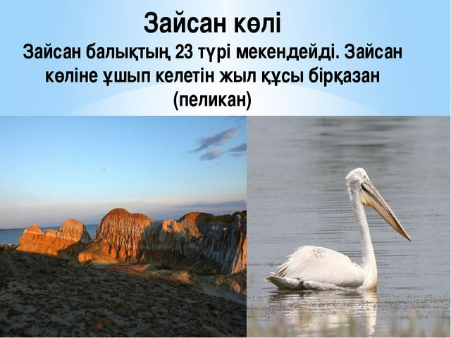Зайсан көлі Зайсан балықтың 23 түрі мекендейді. Зайсан көліне ұшып келетін жы...