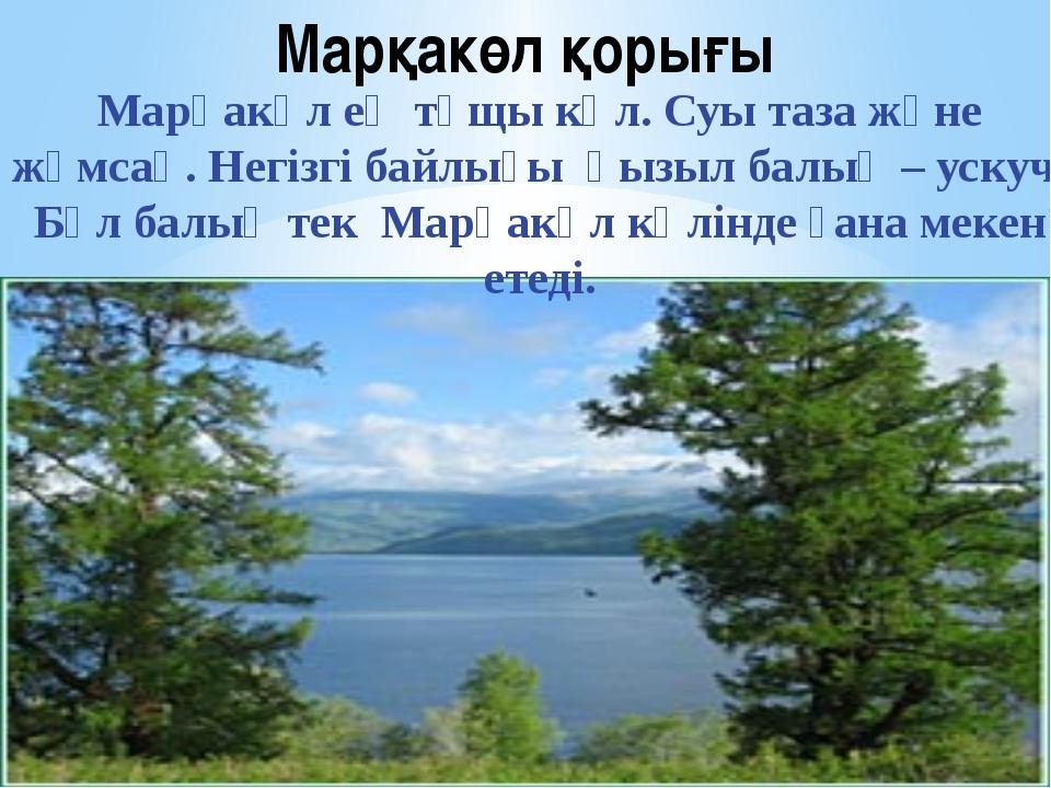 Марқакөл қорығы Марқакөл ең тұщы көл. Суы таза және жұмсақ. Негізгі байлығы қ...