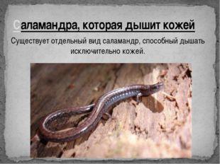 Саламандра, которая дышит кожей Существует отдельный вид саламандр, способный