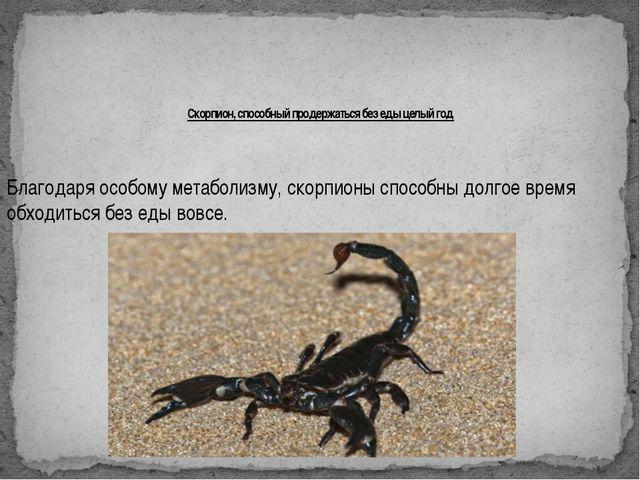 Скорпион, способный продержаться без еды целый год Благодаря особому метабол...