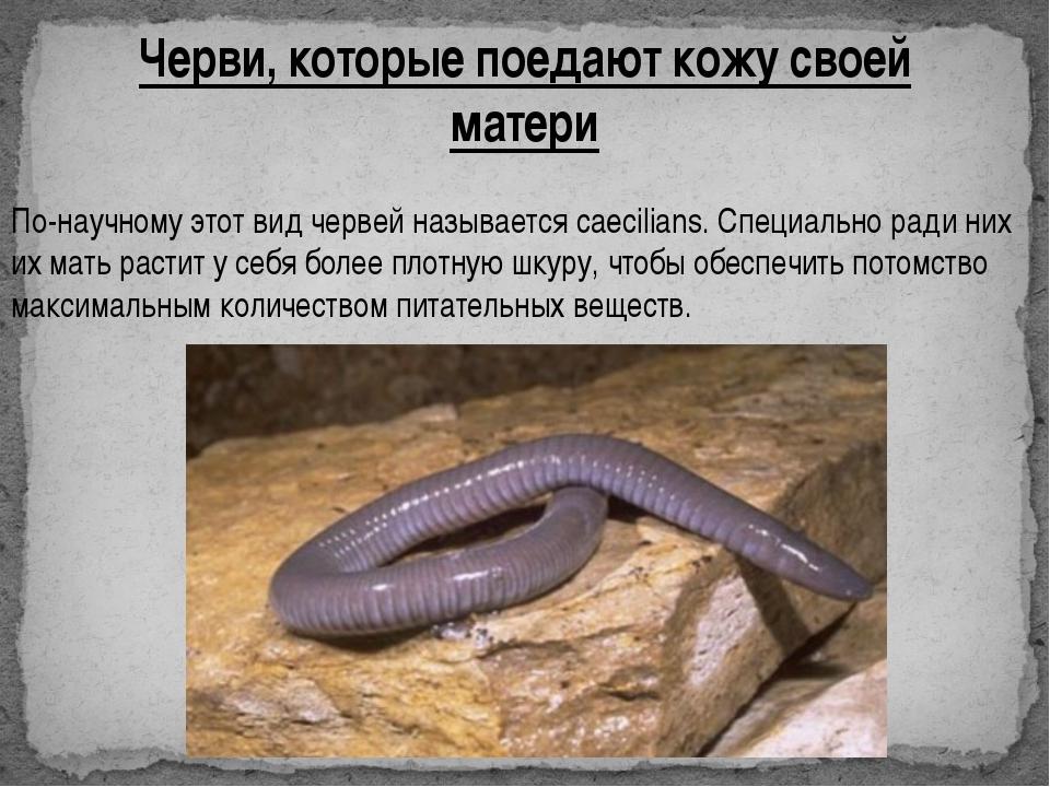 Черви, которые поедают кожу своей матери По-научному этот вид червей называет...