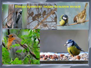 . Птицы приносят людям большую пользу