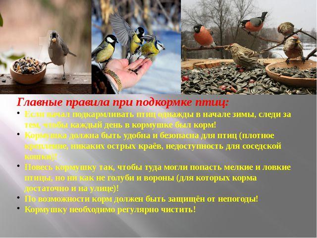 Главные правила при подкормке птиц: Если начал подкармливать птиц однажды в...