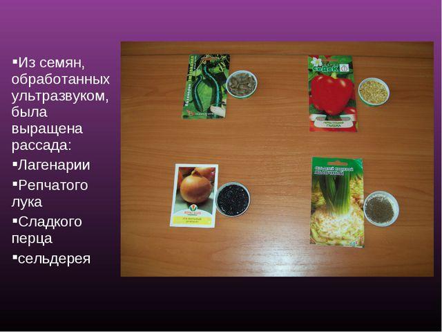 Из семян, обработанных ультразвуком, была выращена рассада: Лагенарии Репчато...