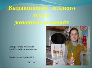 Выращивание зелёного лука в домашних условиях Автор: Ускова Анастасия МОБУ С