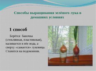 Способы выращивания зелёного лука в домашних условиях 1 способ Берётся баноч