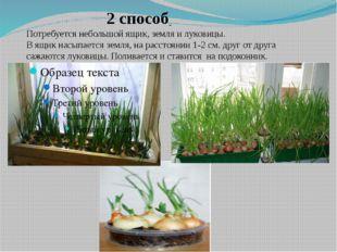2 способ Потребуется небольшой ящик, земля и луковицы. В ящик насыпается зем