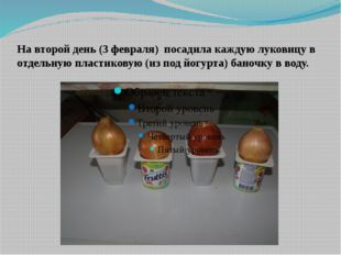 На второй день (3 февраля) посадила каждую луковицу в отдельную пластиковую (