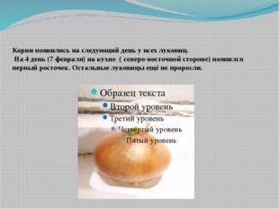 Корни появились на следующий день у всех луковиц. На 4 день (7 февраля) на к