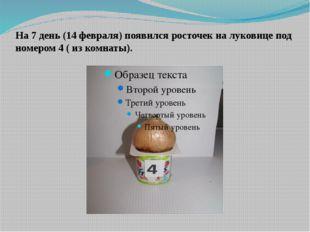 На 7 день (14 февраля) появился росточек на луковице под номером 4 ( из комна