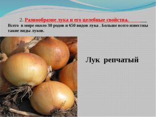 2. Разнообразие лука и его целебные свойства. Всего в мире около 30 родов и