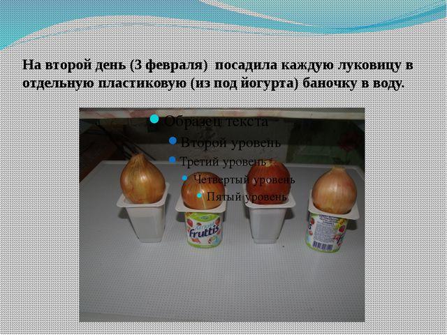 На второй день (3 февраля) посадила каждую луковицу в отдельную пластиковую (...