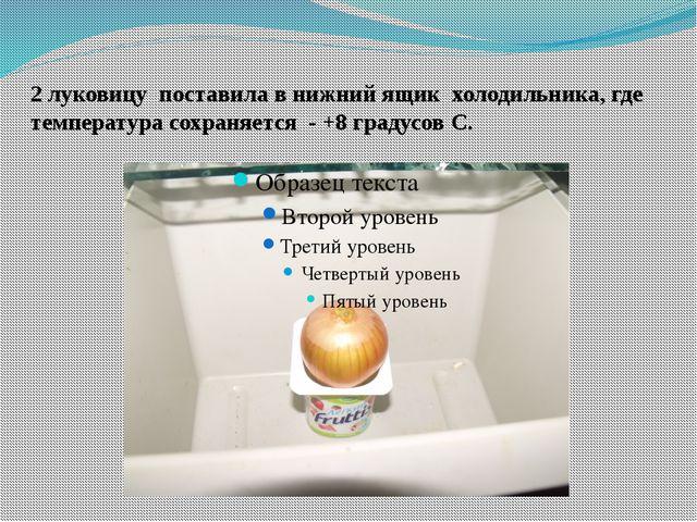 2 луковицу поставила в нижний ящик холодильника, где температура сохраняется...