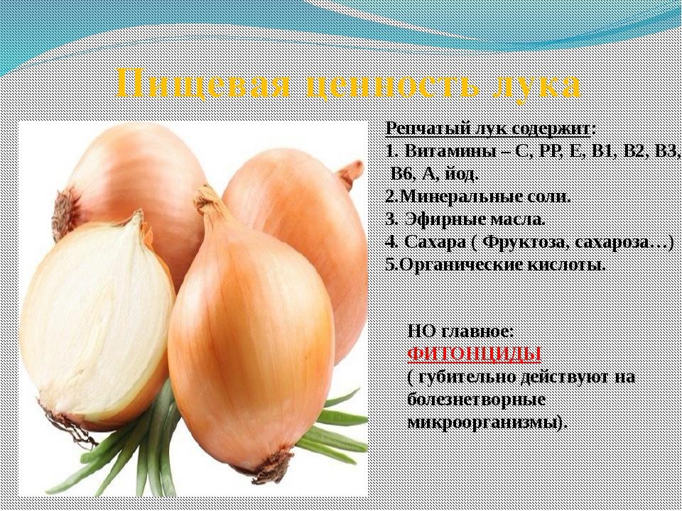 Репчатый лук содержит: 1. Витамины – С, РР, Е, В1, В2, В3, В6, А, йод. 2.Мин...