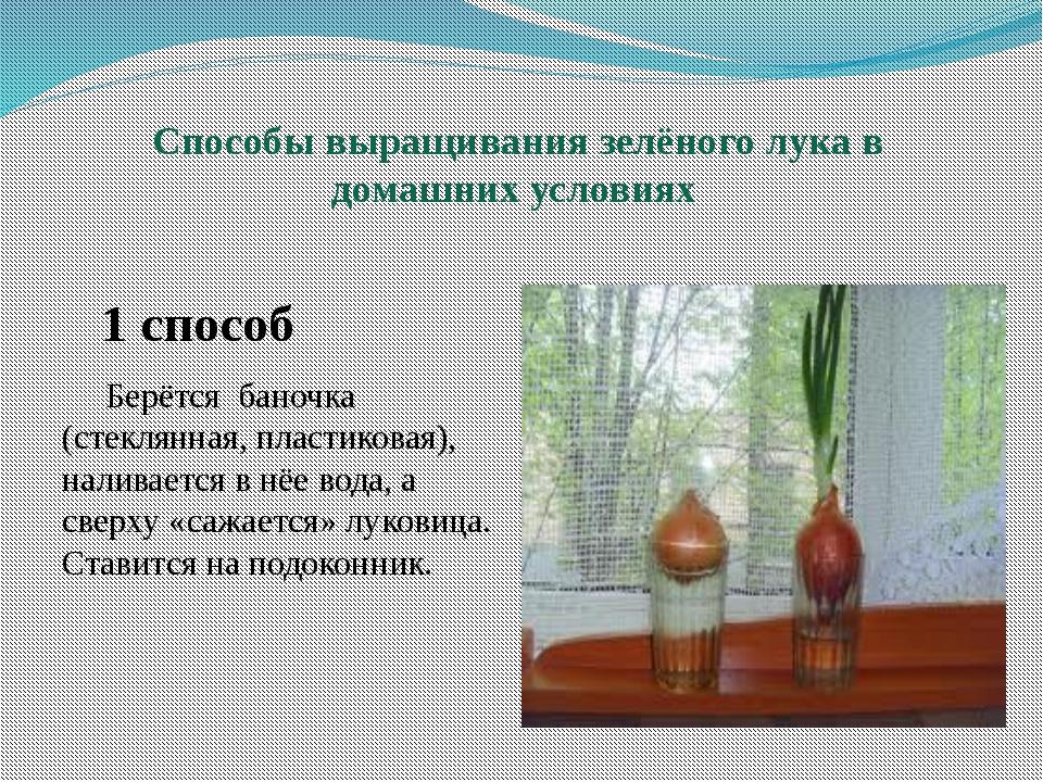Способы выращивания зелёного лука в домашних условиях 1 способ Берётся баноч...