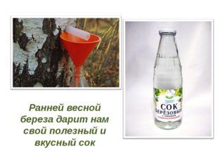 Ранней весной береза дарит нам свой полезный и вкусный сок