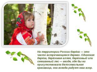 На территории России берёза — это часто встречающееся дерево. Одинокая берёза