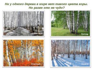 Ни у одного дерева в мире нет такого цвета коры. Но разве это не чудо? Весной