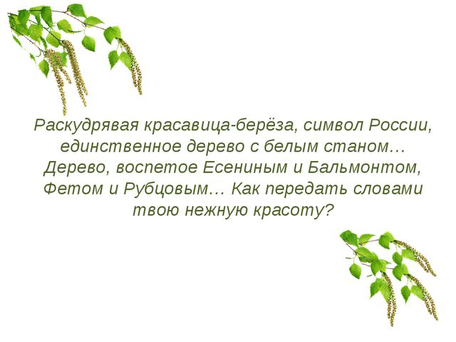 Раскудрявая красавица-берёза, символ России, единственное дерево с белым стан...