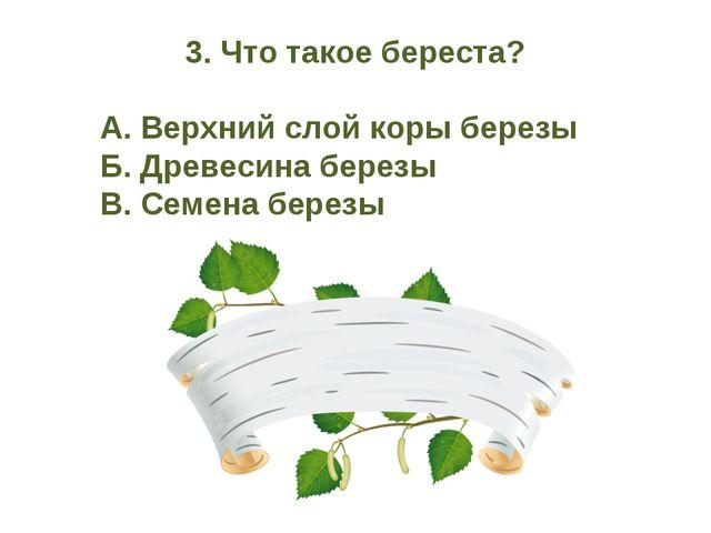 3. Что такое береста? А. Верхний слой коры березы Б. Древесина березы В. С...