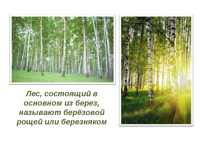 Лес, состоящий в основном из берез, называют берёзовой рощей или березняком