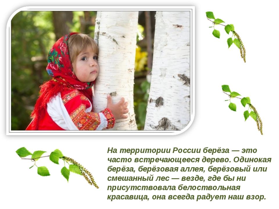 На территории России берёза — это часто встречающееся дерево. Одинокая берёза...