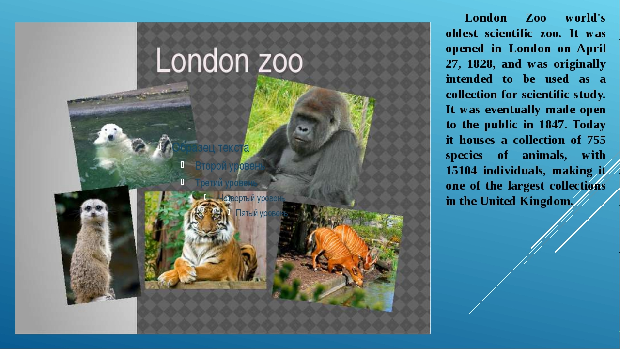 London Zoo world's oldest scientific zoo. It was opened in London on April 2...